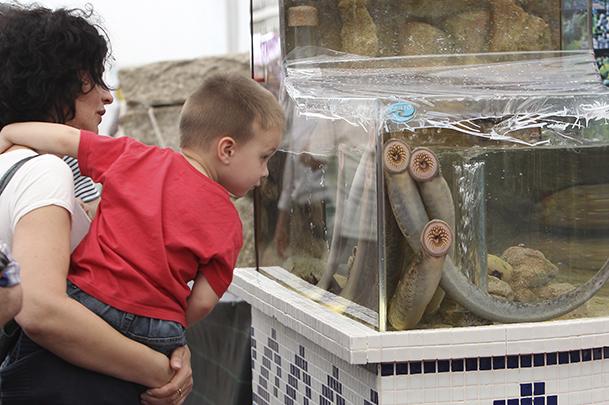 Expositor de lampreas vivas en la LIII Fiesta de la Lamprea de Arbo.