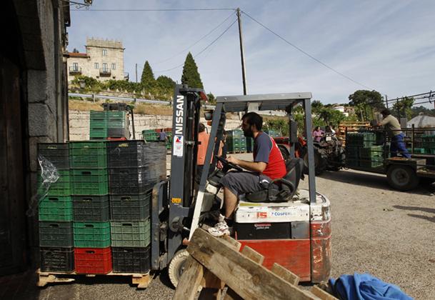 Momento en el que se realiza el pesaje de las cajas cargadas de uva.