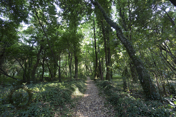 Imagen típica del frondoso bosque que recubre la isla de Cortegada.