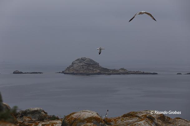 Isla Noro, en el archipiélago de Sálvora.