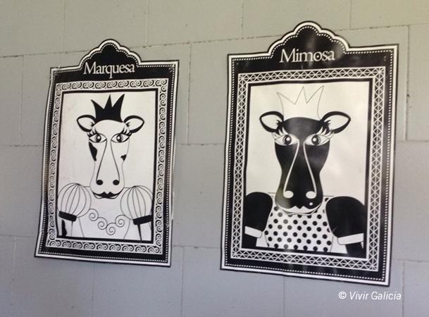 Imagen de dos de las vacas reinas imagen de los quesos de Cortes de Muar.