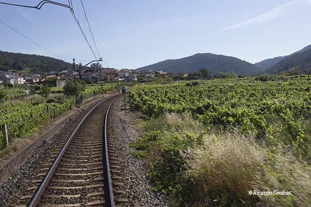 Vía del ferrocarril, entre viñedos, a la entrada de Ribadavia.