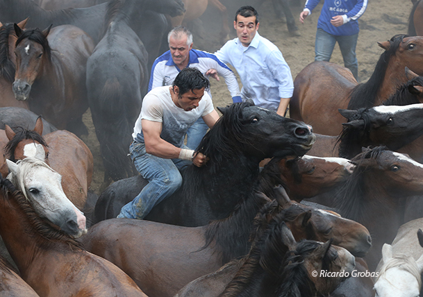 """Tres """"Aloitadores"""" tratan de reducir a uno de los caballos."""