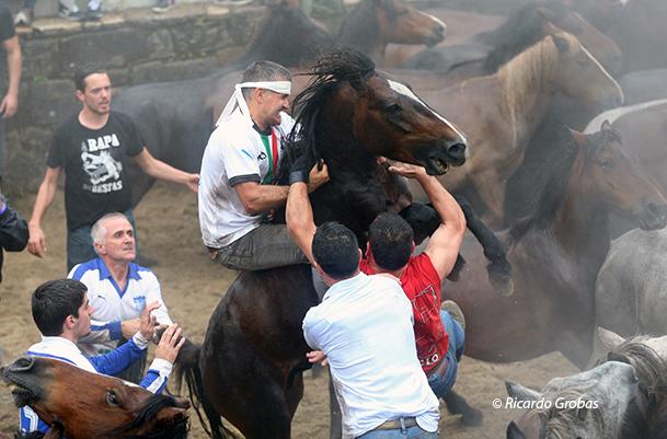 """Un caballo se rebela ante el acoso de los """"aloitadores""""."""