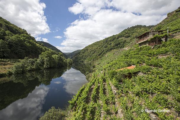 Bodegas restauradas como viviendas, en medio de los viñedos.