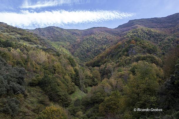 Devesa da Rogueira, reserva botánica de las montañas de Galicia.